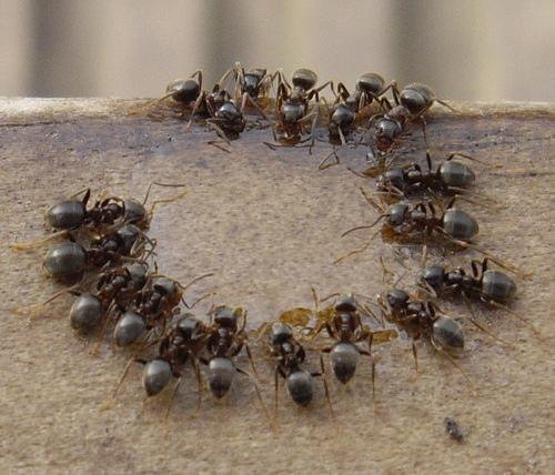 nosotros las hormigas