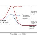 energía de activación - regla 5 segundos - ideas ridículas