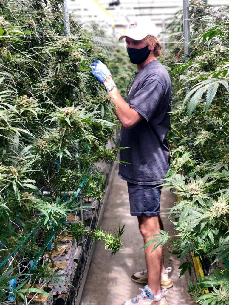 Entrevista a Woody Mooers sobre cannabis, liderazgo, consultoría, equipos y alto rendimiento holístico